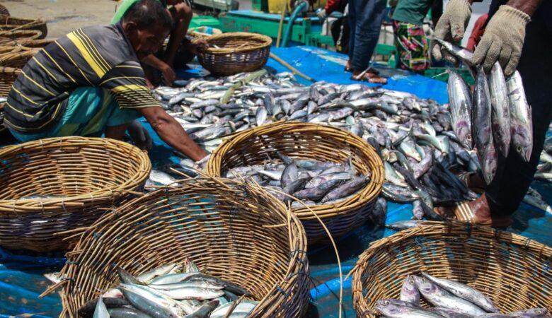 Produksi Ikan