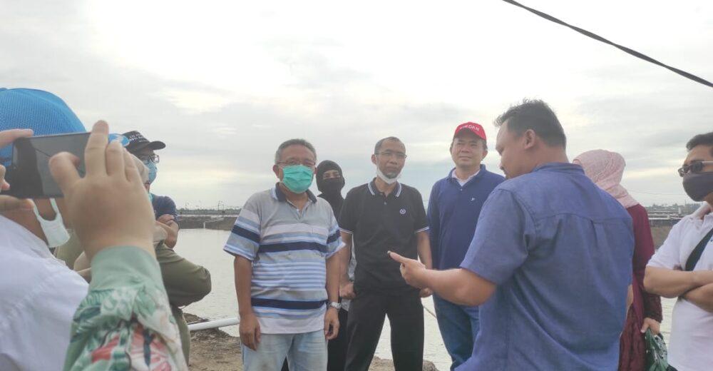 Tambak Udang Lampung
